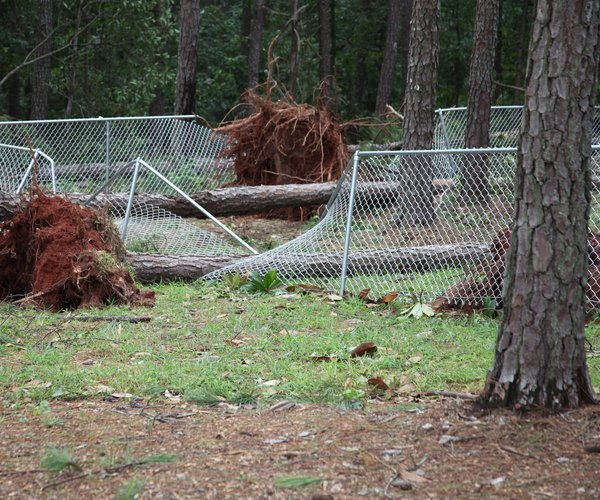 Hurricane Irma - dog park
