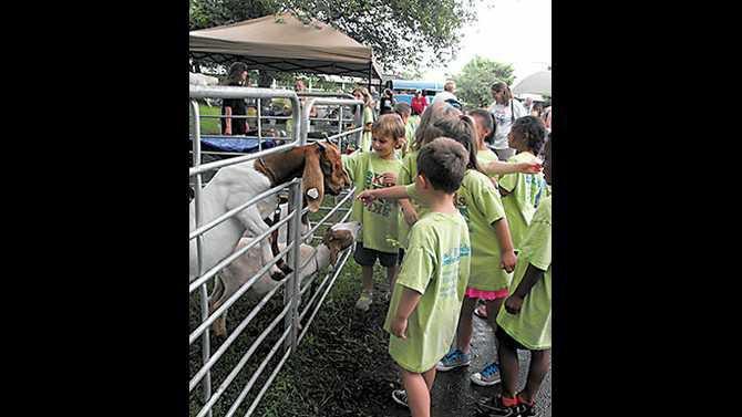 Ag-Day-2013-boer-goats