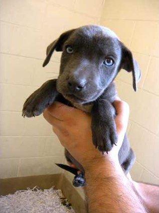 POTW-blue-eyed-pups-DSCN364