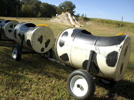 col-cobs-corn-maze-cow-tra