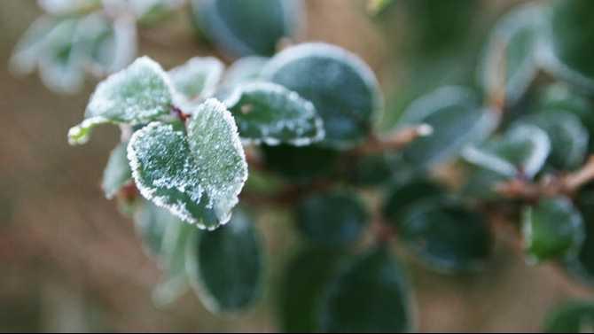 frost-leaf2-SM