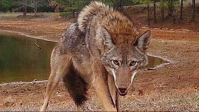 1---0425Nuisance-wildlife