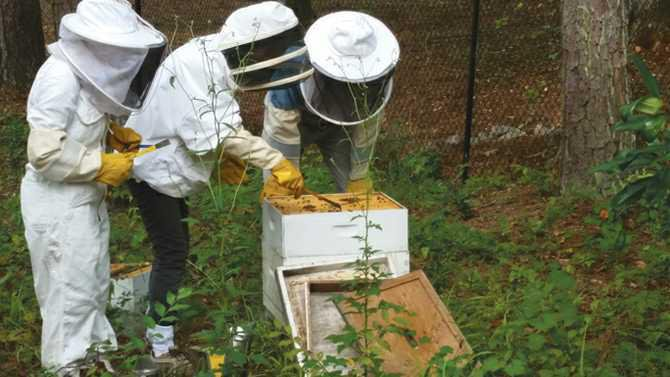 6---Backyard-Beekeeping-offered-at-the-Rock
