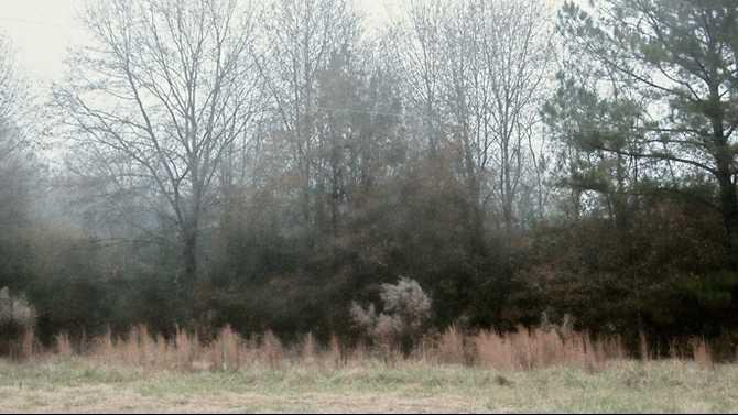 fog-field1