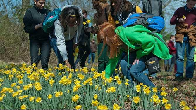 daffodilfest3