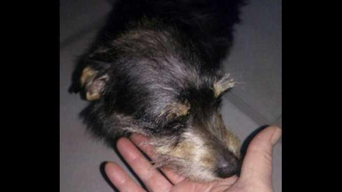 Found-Dog---Social-Circle-Fairplay-Hawkins-Academy-Road-2-10-2015