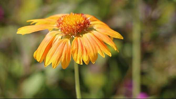 flower-sm