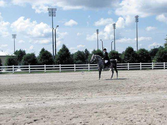 horse-park---6-grey-horiz
