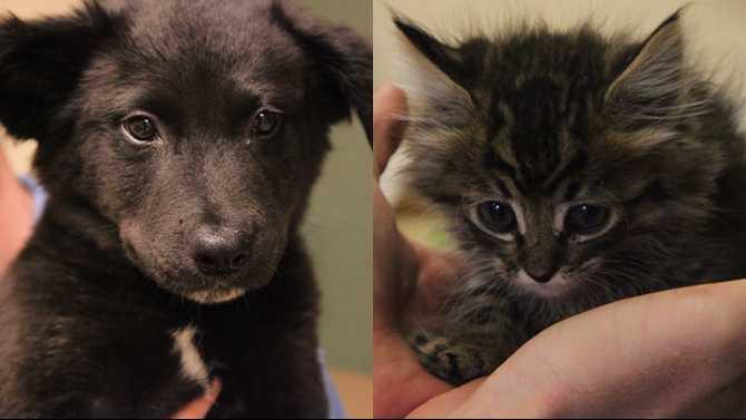 POTW-puppy-and-kitten