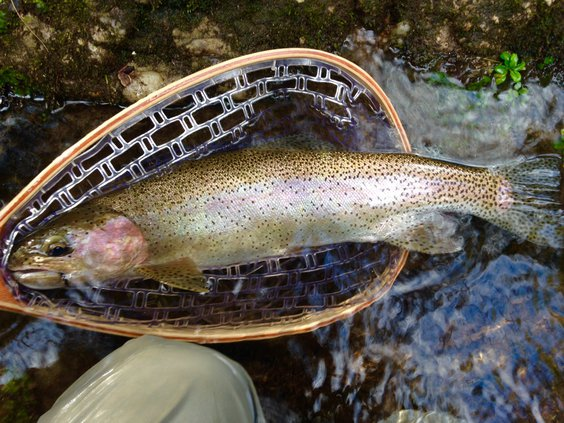 Trout fishing opportunities for all skill levels