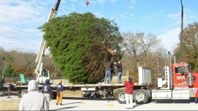 Loading-the-tree-Small