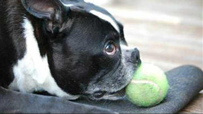 dog-with-tennis-ball-120713-465693-120712-jerky-treats.blocks desktop tease