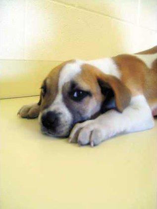 POTW-huckleberry-hound-IMG
