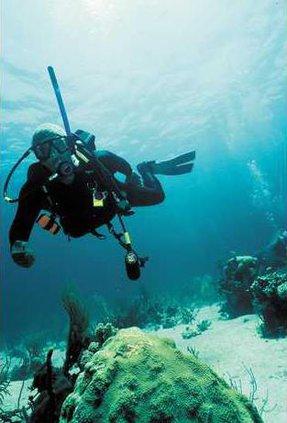 shark-diving-1205360-R1-E00