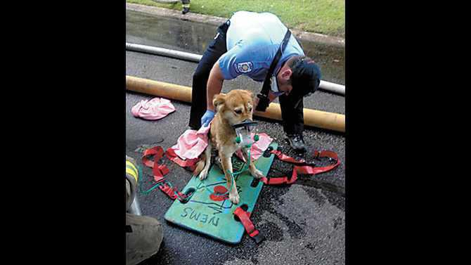 5-26-13-dog-rescued-at-Shady-Lane-Fire