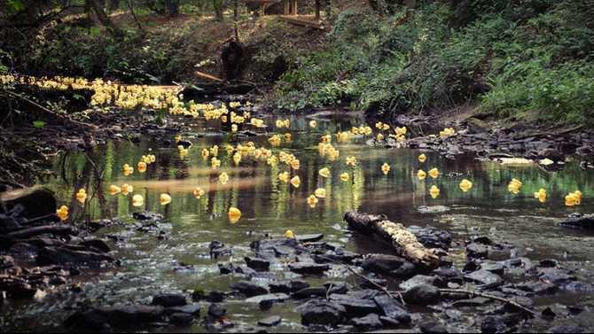 rubber duck8 June 2012 DE