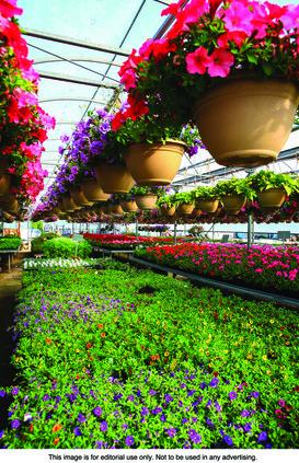 Garden center - metro